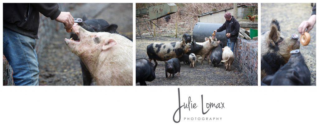 Pigs_0055