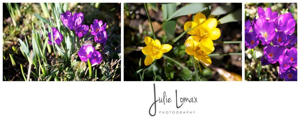spring flowers_0044