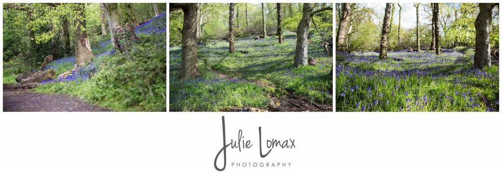 Bluebells Photographer julie lomax 07879011603_0002