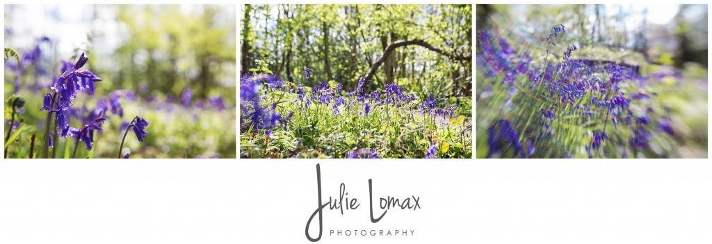 Bluebells Photographer julie lomax 07879011603_0003