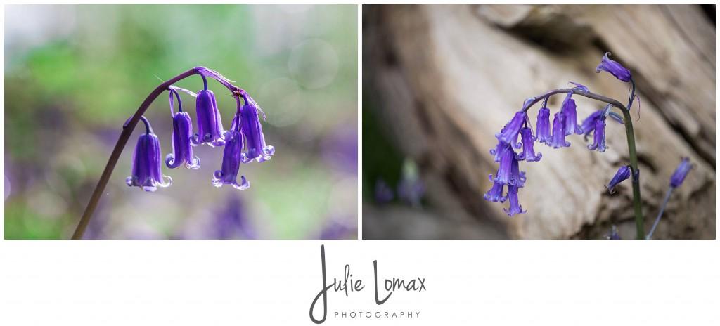 Bluebells Photographer julie lomax 07879011603_0004
