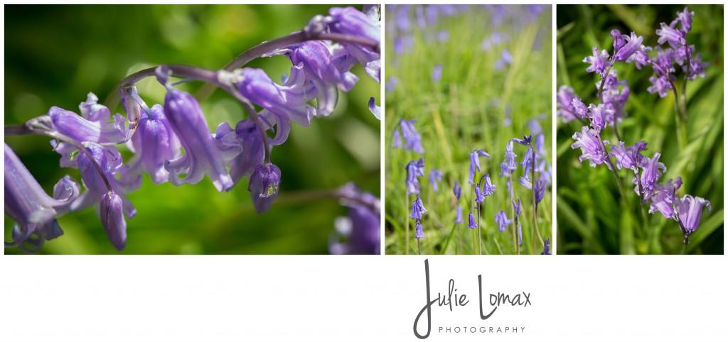Bluebells Photographer julie lomax 07879011603_0005