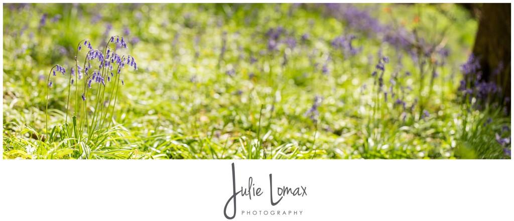 Bluebells Photographer julie lomax 07879011603_0006