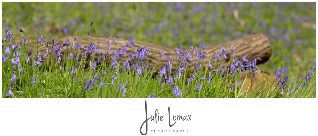 Bluebells Photographer julie lomax 07879011603_0007