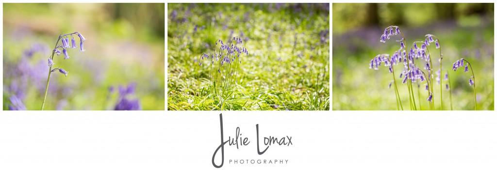 Bluebells Photographer julie lomax 07879011603_0008