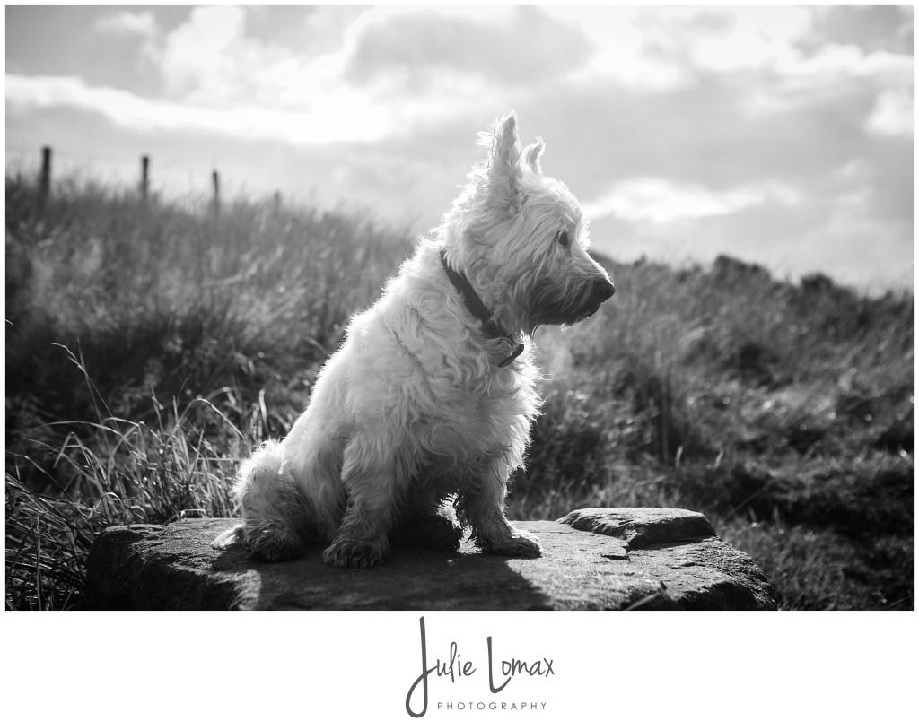 Photographer Bolton julie lomax 07879011603_0013
